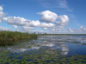 The Iberá Marshlands image