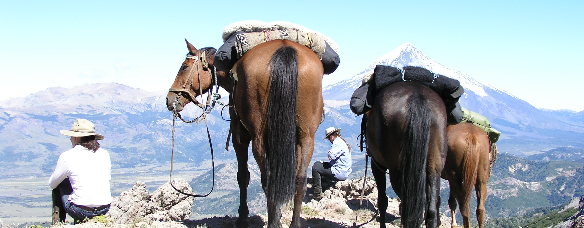 Andes and horses