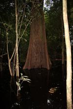 Image: Anavilhanas Jungle Lodge - Amazon lodges and cruises