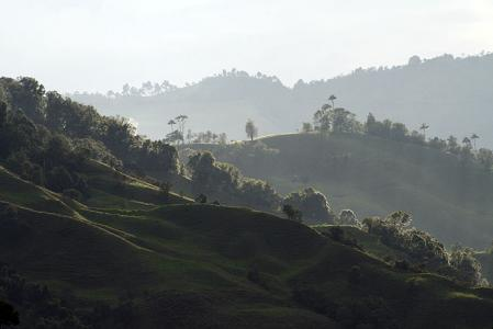 The coffee region