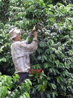 Image: Coffee Park - The coffee region