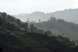 The coffee region image