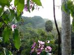 Image: Macaw Lodge - Manuel Antonio and Uvita