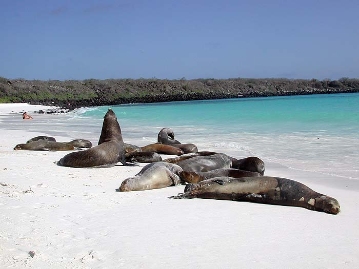 Peru and the Galapagos image