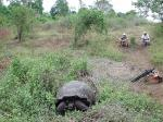 Image: Giant tortoises - Santa Cruz (Indefatigable)