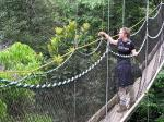 Image: Canopy Walkway - The Central forest zone
