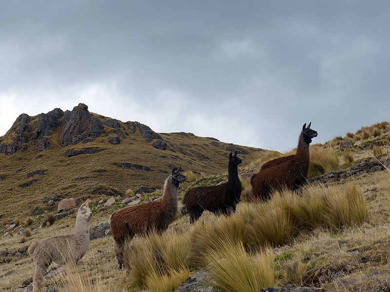 PE1014JL0720_mlp_lares_day2_amaru_to_viacha_and_pisac.jpg [© Last Frontiers Ltd]