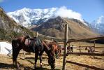 Soray Lodge (Horses in the corral.) - The Inca Trails, Peru