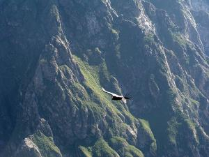 The Colca Valley image